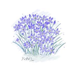1月23日の誕生花 トリテレイア・ラクサ 嬉しい知らせが届きますように
