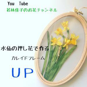 【動画レッスン】水仙の押し花で作るカレイドフレーム