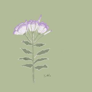 7月19日の誕生花 昼咲月見草 人には話せぬ恋をしています