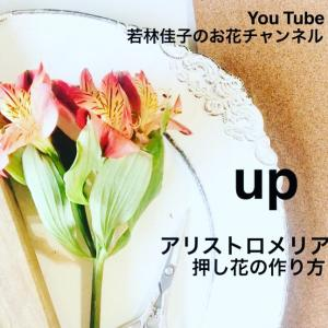 【動画レッスン】アリストロメリアの押し花の作り方