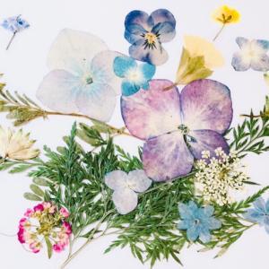 押し花セラピ―例 なりたい自分になれるカード「飛んでいるわたし」より