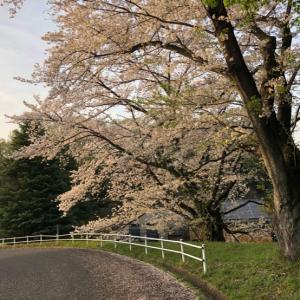 桜から新緑のシーズンへ