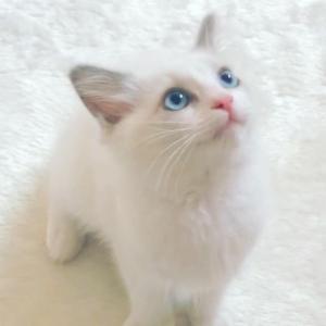 猫ちゃん好きには、たまらないポーセラーツ!