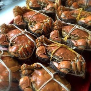 上海蟹シーズン!上海蟹を持ち歩いて!蟹粉烩豆腐