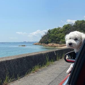 人との接触を避け海辺をドライブ!