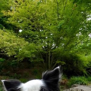 セラピー犬訪問ボランティア、別れと出会い
