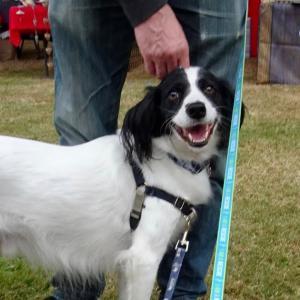 犬のオリンピックで金メダル!