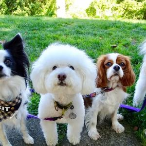 5匹のお友達とランチ散歩
