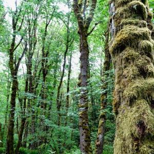 もののけの森で元気をリセット