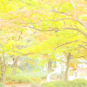 秋色の帰り道?