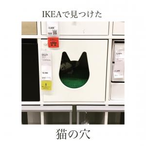 IKEAで見つけた、猫の穴