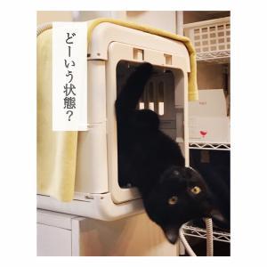 キッチンタオル 【 掛け→押し込む 】 に変更しました。