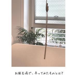 超簡単♪ 我が家の 珪藻土マット、カビ対策なお手入れ方法