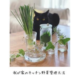 お料理研究家のキッチンに学ぶ、葉物野菜が長保ちする野菜収納とは?