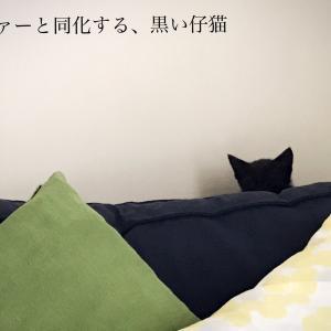仔猫との暮らし、はじまります♪