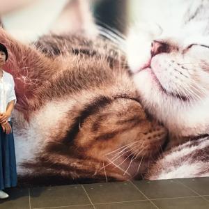 猫がかわいいだけ展へ ~梅田グランフロント~