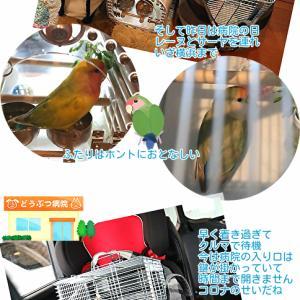 横浜小鳥の病院へ約5時間かけて