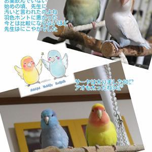 鳥達の食生活と病気の関わり