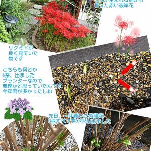 ミドが逝くときの花たち