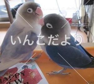 【拡散希望】古き良き鳥友さん