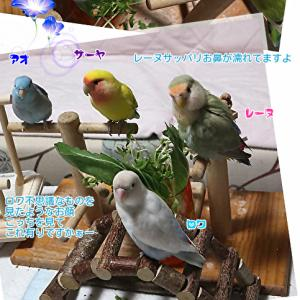 初めて見る光景に4鳥男子は目が点に。