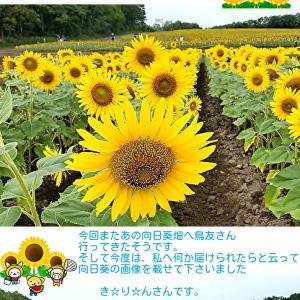 あの時の向日葵畑