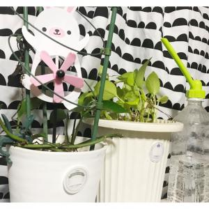 今日は植物学の日(植物、家で育てたことある?)