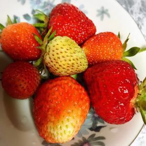 【夕飯メニュー】今日のメンズご飯と庭で取れたいちご。