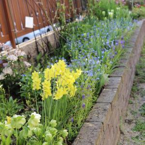 始業式&今日の庭