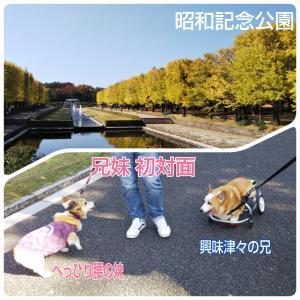 昭和記念公園でご対面(*^.^*)