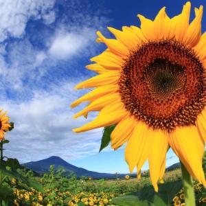菜根譚 128 人と宇宙は一体 向日葵