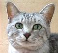 飼い主から猫にコロナ感染 ベルギーで初確認