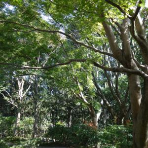 日本庭園★茶室へ