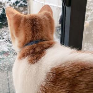 雪かきでご近所とトラブル