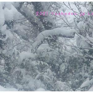 雪下ろし雪かきの無限ループ