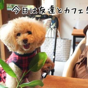 神戸北野のcafe236 de ランチ会