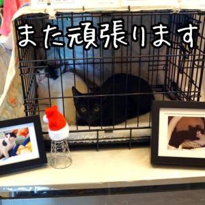 親子猫の保護第2部★ほろ苦デビュー