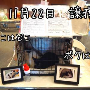 親子猫の保護第2部★チャコちゃん、ケンちゃんに八つ当たりされる