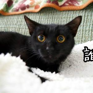 12月に保護、1月トライアルへ★黒猫のルカ
