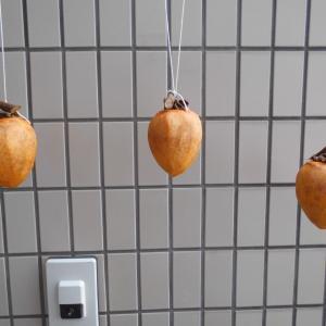 「干し柿速報」今日の干し柿 ④