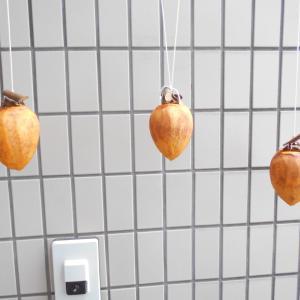 「干し柿速報」今日の干し柿 ⑥