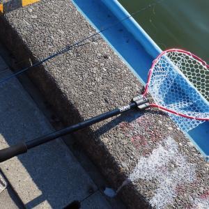 管釣り用ネットのサイズ比較 〜 PROX ラバーランディングネット12型と15型
