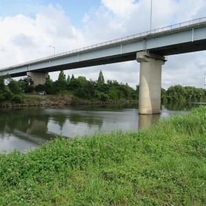 荒川パトロール 〜 バス釣り(ボ)記録更新中