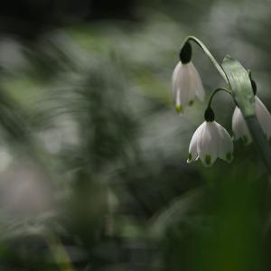 狭い庭に咲く花は