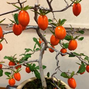 【秩父イベント情報】11/16,17(土,日) 秩父市 上町街かどギャラリーにて「姫柿展」開催