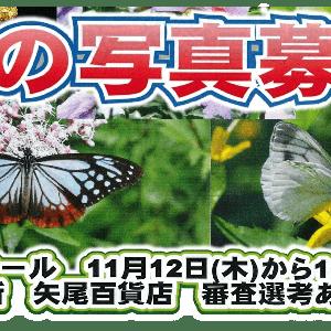 【コンクール】秩父と甲武信ユネスコエコパークの『蝶』写真コンクールのご紹介です