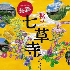 【秩父花だより】秋のハイキング 秩父郡長瀞町「秋の七草寺2020」シーズンが始まりました