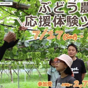 【秩父イベント情報】「観光×ボランティア!ボラっとちちぶ」ぶどう農園応援体験ツアーのご紹介です