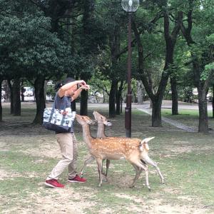 主人は鹿使い?!@奈良
