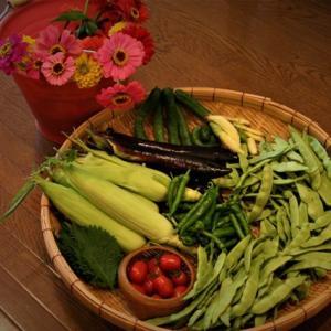 北摂の家庭菜園「7月の野菜の収穫」